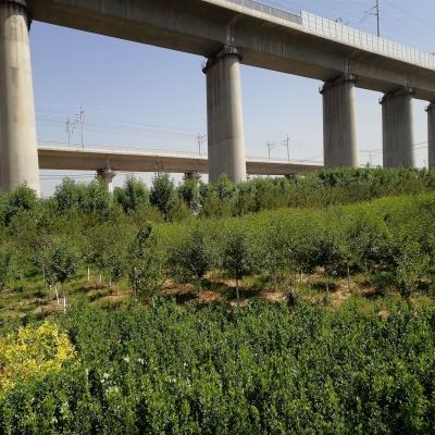 卧虎山景观绿化工程